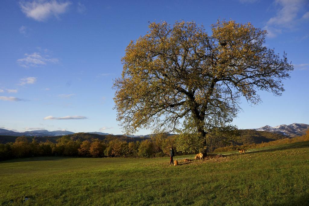 Giornata degli alberi: visite gratuite a Villa Borghese