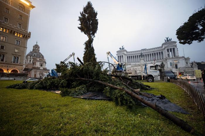 Roma ride ancora: ecco Spezzacchio, l'albero 'a puntate'
