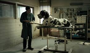Dogman fuori dalla corsa degli Oscar