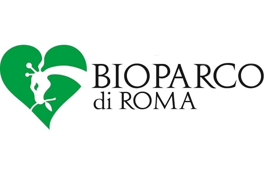 Bioparco di Roma, ok a pinguini del Capo