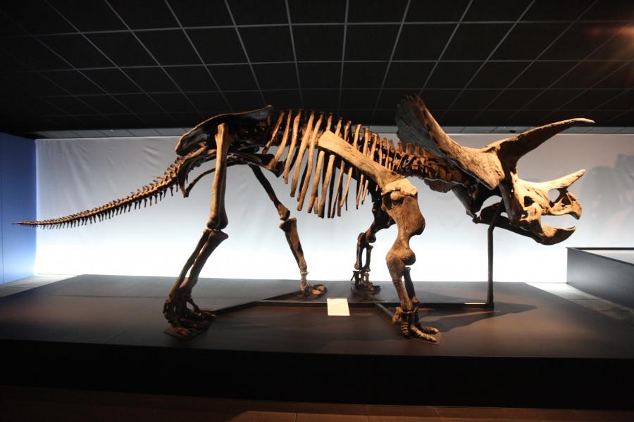 Dinosauri a Cerveteri, via il corso gratuito