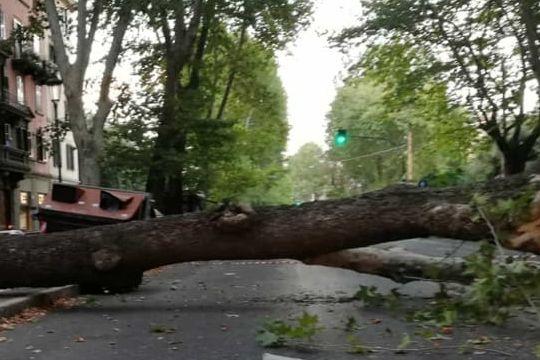 Roma, albero caduto a Prati in piazza Cola di Rienzo