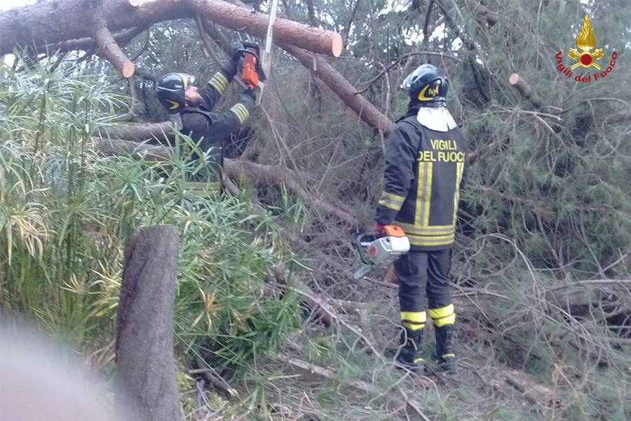Vento a Roma cadono alberi e strade chiuse