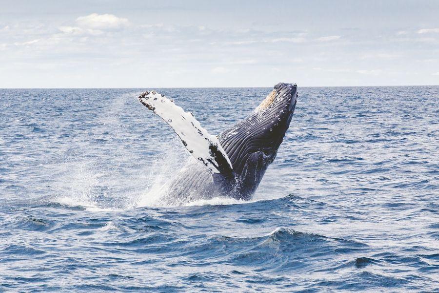 La Russia libera 100 balene in cattività