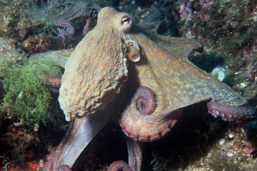 Un nuovo tessuto innovativo dallo studio dei molluschi