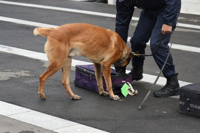 Cani anti-bomba